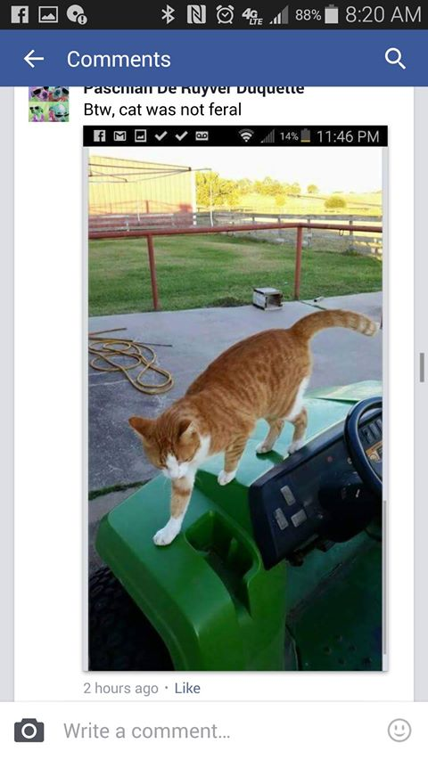 Facebooker's post alleges that the cat in the photo is a neighbors cat and not a feral one.