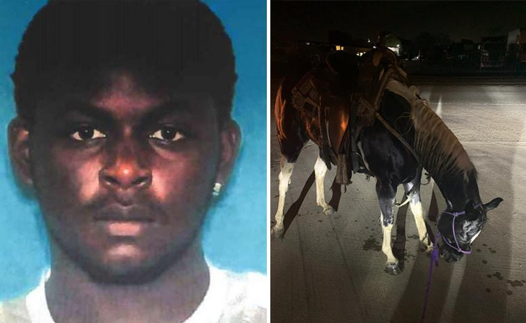Brookshire Police Seek Suspect In Animal Cruelty/Death